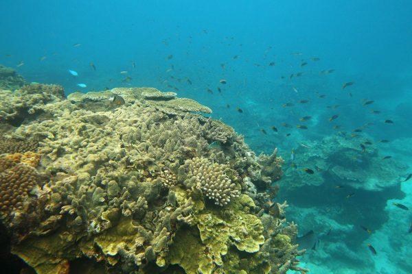 El cambio climático ha destruido más de la mitad del mayor arrecife de coral de Japón