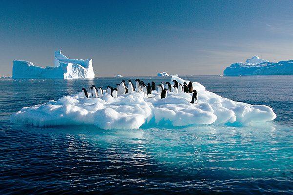 El cambio climático en la Antártica ya atrae a nuevos habitantes