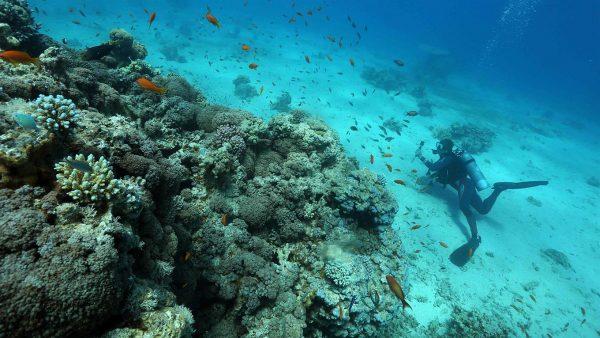 Los corales podrían ser el secreto para sobrevivir al cambio climático