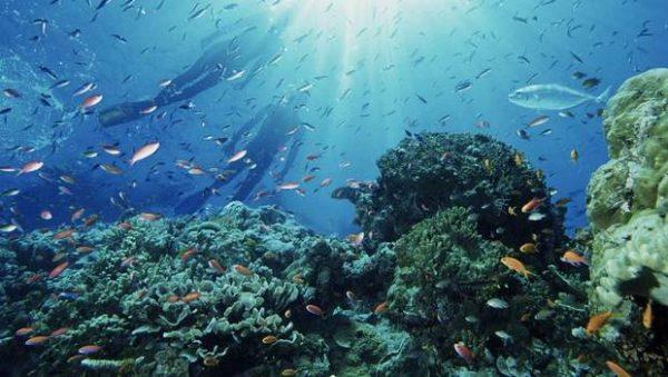 En Conferencia sobre los Océanos: Llaman a tomar acciones inmediatas para combatir el cambio climático