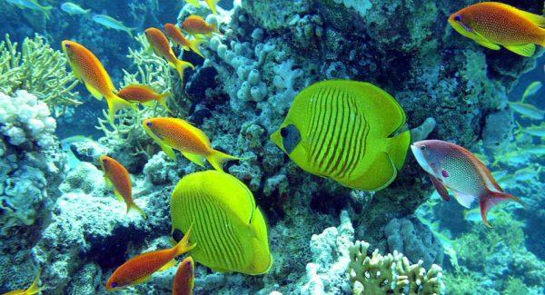Reservas marinas ayudan a mitigar los impactos del cambio climático