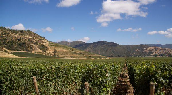 Para salvar al vino chileno de cambio climático, los productores se están yendo al sur