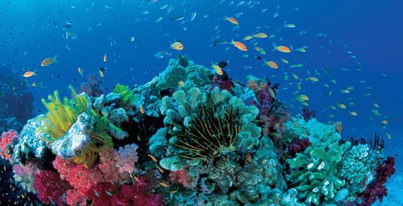 Científicos cuestionan si los corales podrán adaptarse al cambio climático