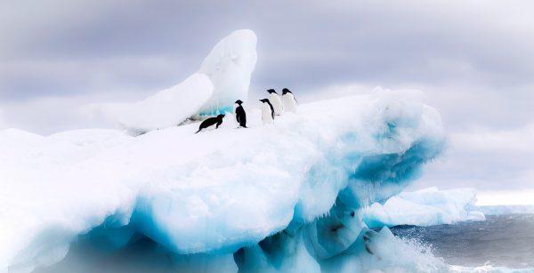 El cambio climático provoca masiva muerte de pingüinos en la Antártida