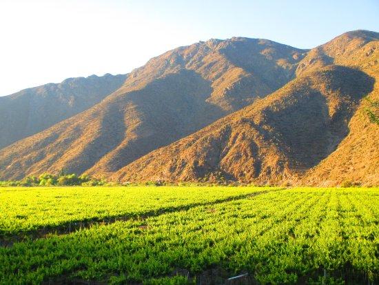 Científicos buscan revertir los efectos del cambio climático en la producción de pisco