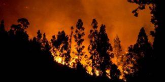 Los efectos del cambio climático en los incendios forestales chilenos