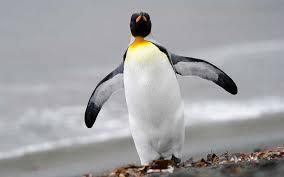 El cambio climático amenaza el 50% de la población mundial de pingüinos