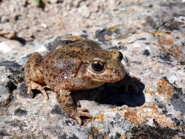 Descubren los efectos del cambio climático en los diferentes tipos de anfibios
